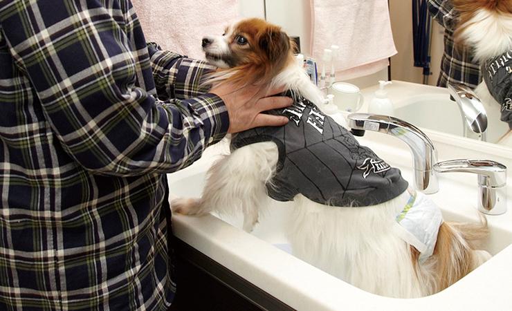 ペット対応の深型洗面ボウル